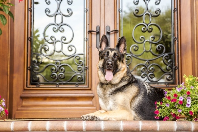 What animal is best to guard your home? - Verisure Smart Alarms