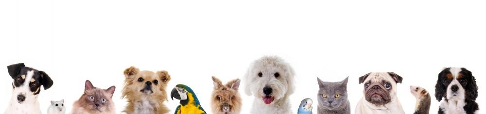 Pet Friendly - Verisure Smart Alarms