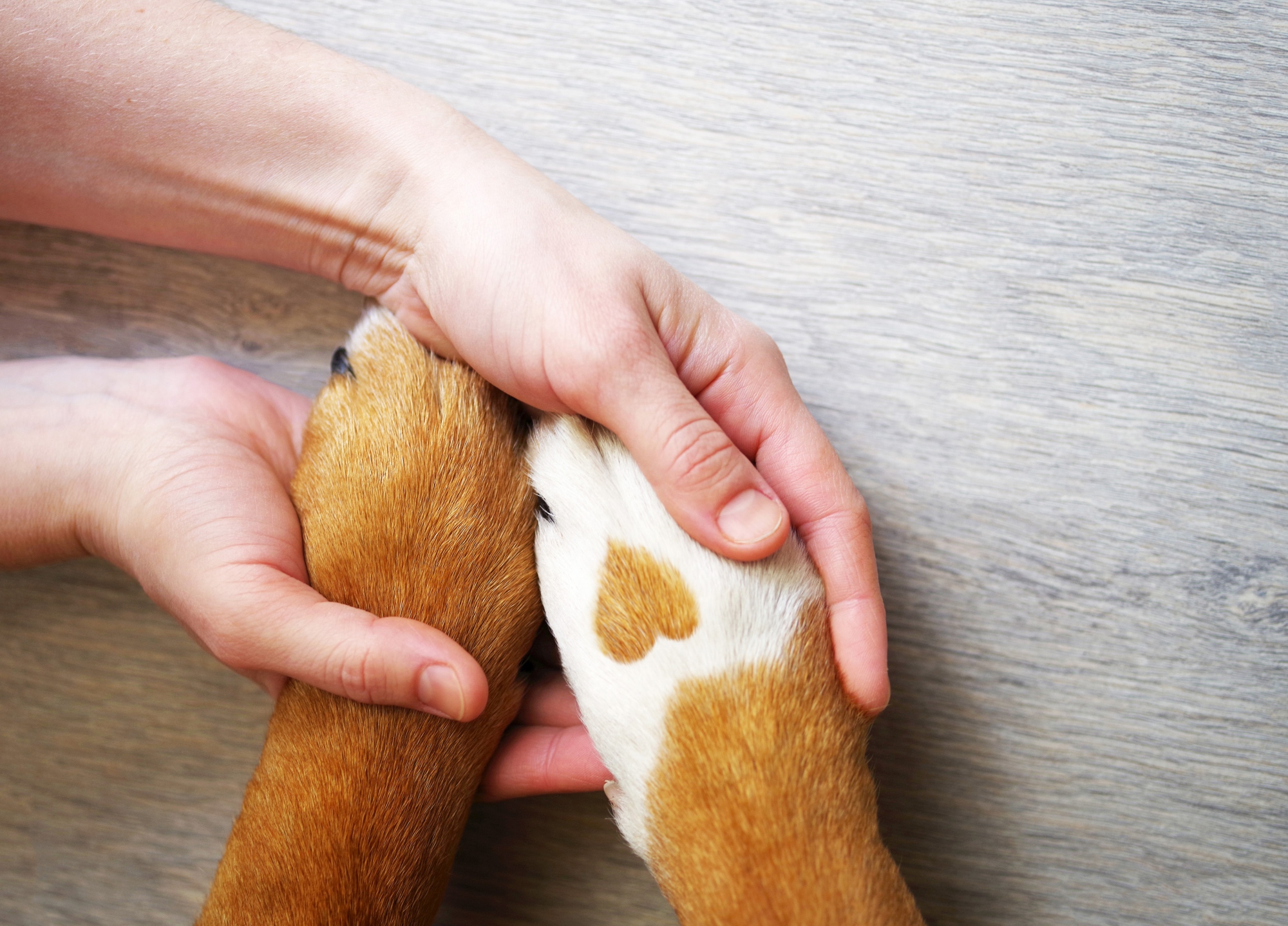 Human holding dog paws with heart